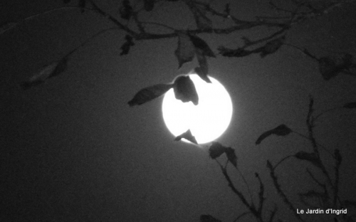 clair de lune 013.JPG