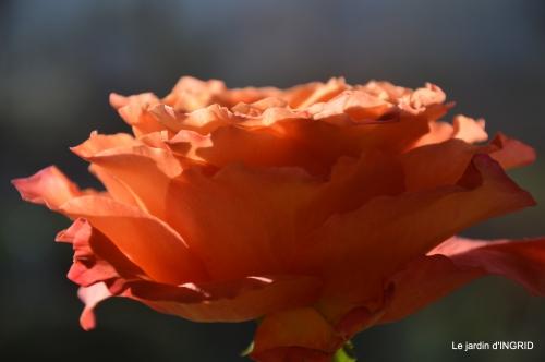 anniversaire Romane,gloriette,jonquilles,rose,coucher de soleil 088.JPG