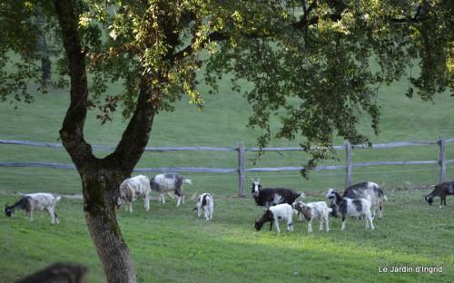 moi,Trémolat,Limeuil,Mombazillac,Bridoire,chèvres Banes,jardin,R 147.JPG
