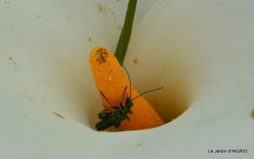 Roses du jardin,soirée Monpazier,puces Eymet 185.JPG