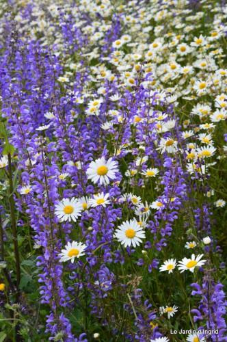 canal,fleurs blanches,marguerites,LE FLEIX,osier 028.JPG