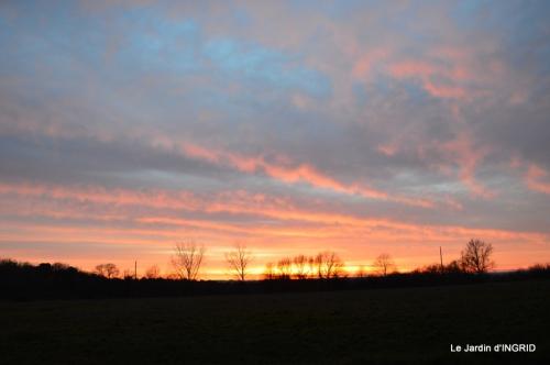 jonquilles,Montignac,massifs,coucher de soleil 073.JPG