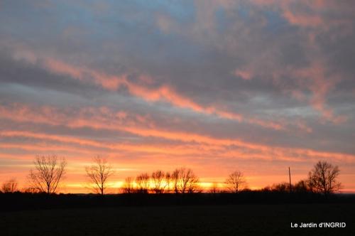 jonquilles,Montignac,massifs,coucher de soleil 072.JPG