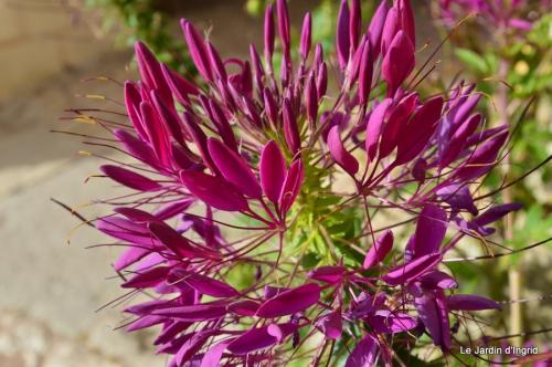 travaux,érable rouge,abeilles,Monpazier,jardin 091.JPG