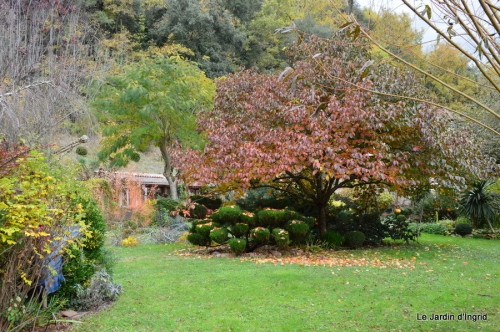travaux,érable rouge,abeilles,Monpazier,jardin 065.JPG