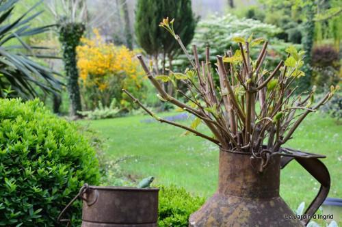 tillandsia,rainette,terreau,jardin 050.JPG