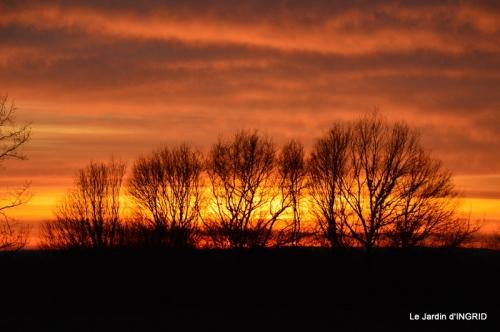jonquilles,Montignac,massifs,coucher de soleil 075.JPG