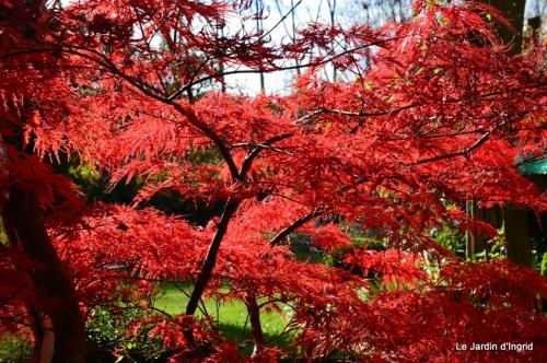 jardin et travaux d'automne 006.JPG
