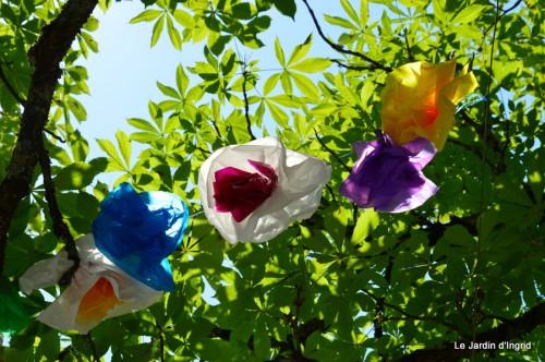 jardin,gléditzia,fleurs Beaumont,pavot ,lys,orchidée 081.JPG