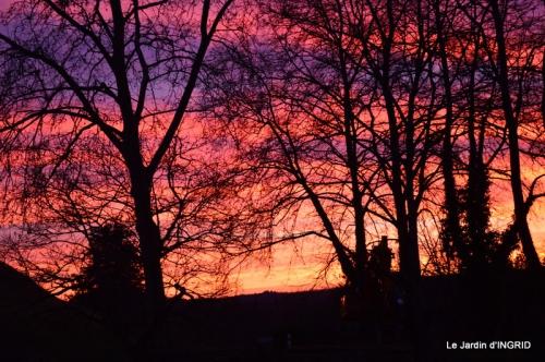 jonquilles,Montignac,massifs,coucher de soleil 078.JPG