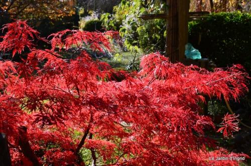 jardin automne ,petits roses 052.JPG