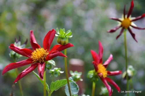 jardin,fruits,Caro,papillons,manthe religieuse,Lalinde 033.JPG