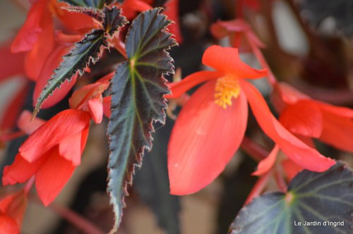 coeur des fleurs,papillons,libellules 188.JPG