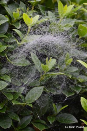 Lalinde,toiles d'araignées,les filles à St Astier 038.JPG