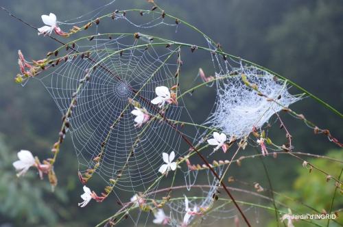 brouillard le matin d'automne 067.JPG