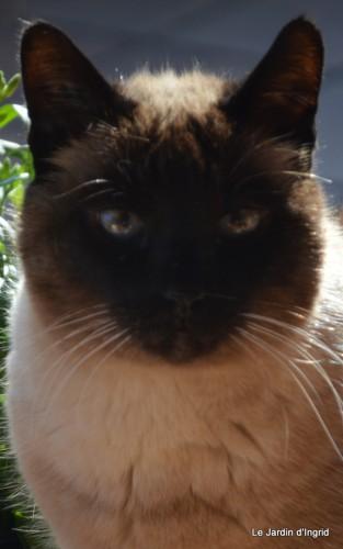 bourdon,givre,le chat 099.JPG