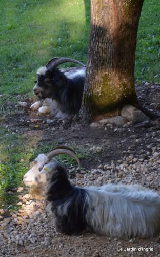 moi,Trémolat,Limeuil,Mombazillac,Bridoire,chèvres Banes,jardin,R 144.JPG