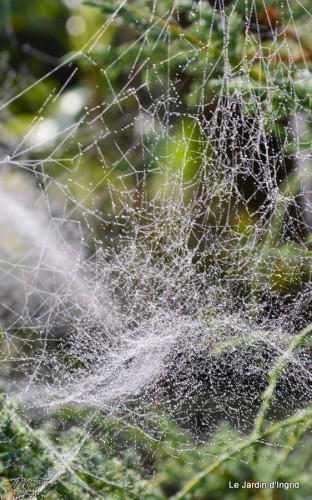 Lalinde,toiles d'araignées,les filles à St Astier 058.JPG