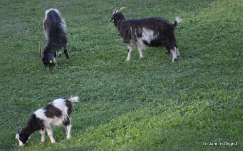 moi,Trémolat,Limeuil,Mombazillac,Bridoire,chèvres Banes,jardin,R 142.JPG