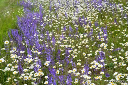 canal,fleurs blanches,marguerites,LE FLEIX,osier 031.JPG