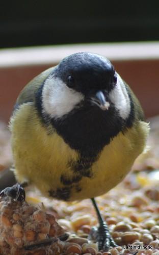 oiseaux,poules,plantes janvier 110.JPG